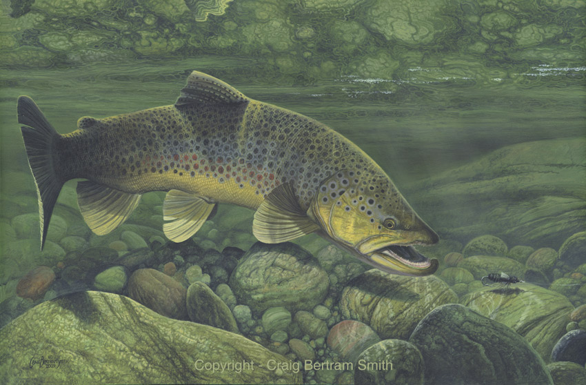 brown trout2